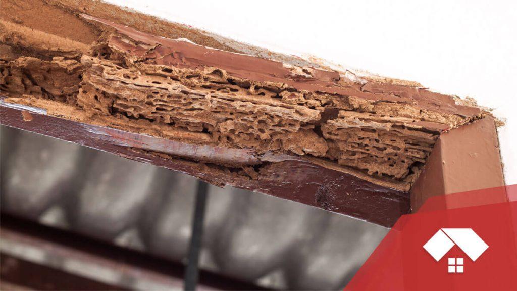 Madrea hueca por las termitas