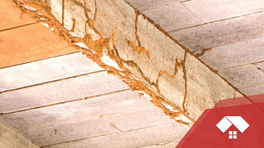 Conductos de barro hechos por termitas