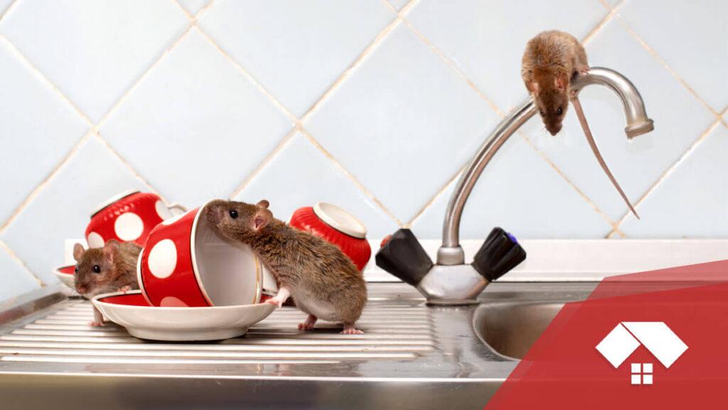 Ratones o ratas en casa
